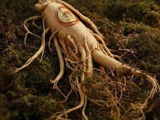 Adaptogen Herbs Health Benefits
