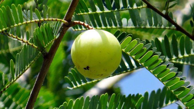 The Evidence-Based Health Benefits Of Amla (Indian Gooseberry)