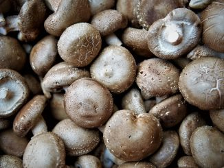 Shiitake Mushroom Improves Human Immunity