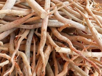 "The Evidence-Based Health Benefits Of Tongkat Ali (Eurycoma longifolia) aka ""Malaysian Ginseng"""