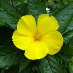 Damania Mens Health Herbs