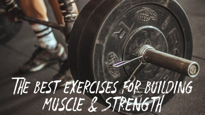 The Best Exercises For Building Muscle & Strength