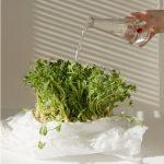 Microgreens Micronutrient Superfoods