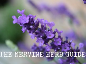 The Nervine Herb Guide