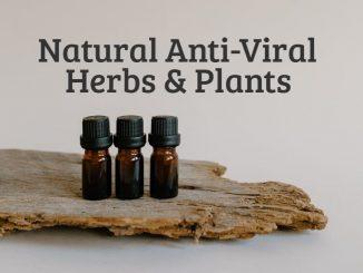 Natural Anti-Viral Herbs & Plants